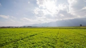 crop_fields